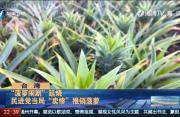 """岛内担心港澳跟进禁菠萝  民进党当局""""卖惨""""推销菠萝"""