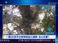 福安:一棵600多年古树突然起火燃烧 怎么回事?