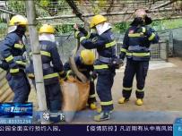 30多公斤大蟒蛇偷吃鸭  消防员围捕排险情