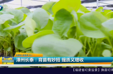 漳州长泰:育苗有妙招 提质又增收