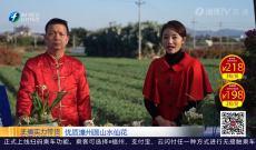 《乡村欢乐购》优质漳州圆山水仙花