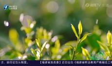 《多彩闽茶》3月7日