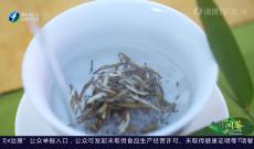 《多彩闽茶》3月14日