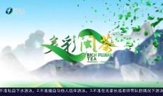 《多彩闽茶》7月11日
