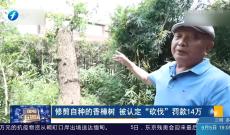"""《律师在现场》修剪自种的香樟树 被认定""""砍伐""""罚款14万"""