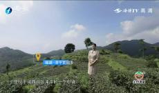 台湾青年陈耘嘉:故园情 茶乡梦