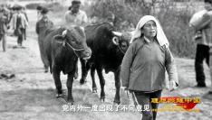 """""""百炼成钢""""系列展播丨(四十三)联产承包责任制"""