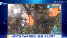 遭遇雷击,一棵600多年的古树燃烧起火……