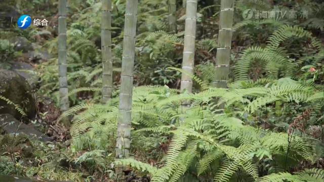 《新闻启示录》将乐:打造绿色发展的山区样板