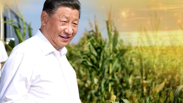 习近平说的这些农谚,中国人永远不能忘